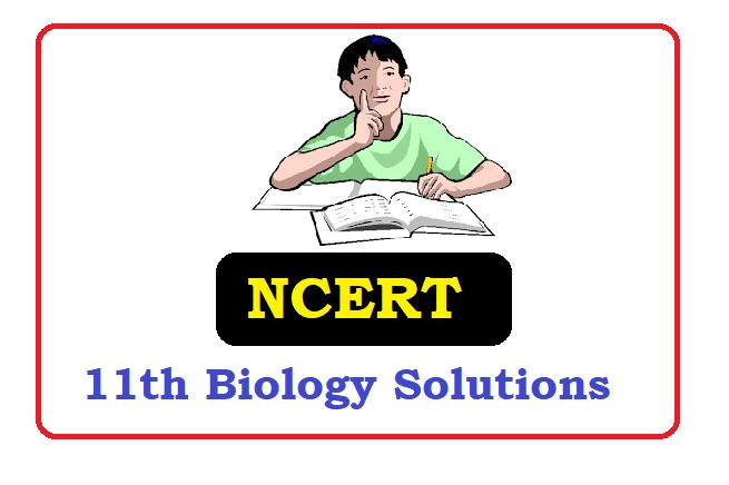NCERT Class 11  Biology Solutions 2021